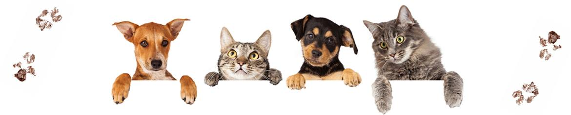 pet promotional savings banner