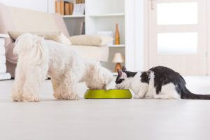 Where to Purchase Affordable Pet Supplies