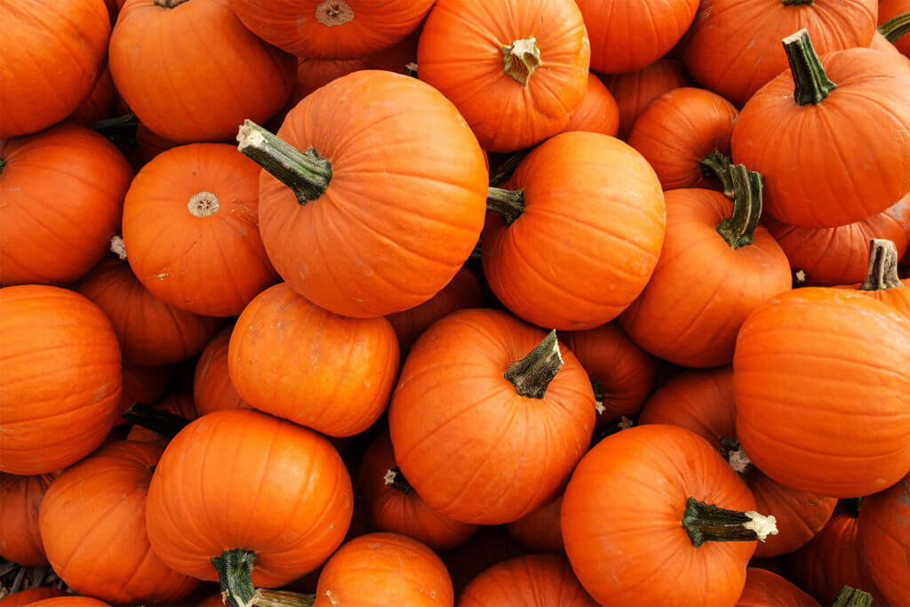 All Things Pumpkin 1600x1067